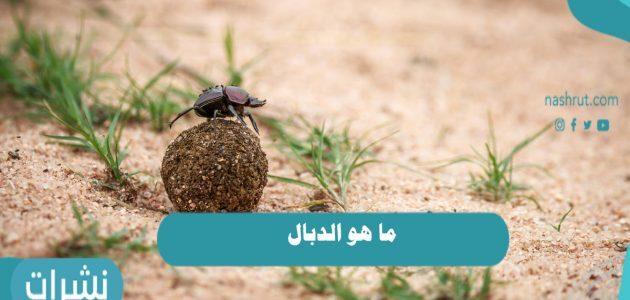 ما هو الدبال ودوره في خصوبة التربة