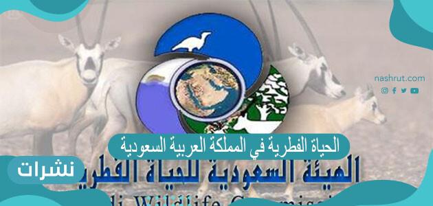 الحياة الفطرية في المملكة العربية السعودية 1442