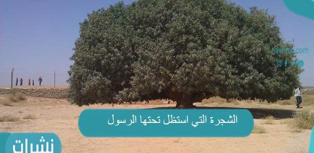 الشجرة التي استظل تحتها الرسول