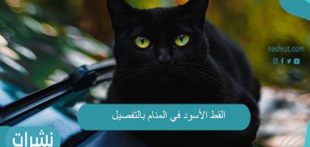 القط الأسود في المنام لابن سيرين وابن شاهين والنابلسي