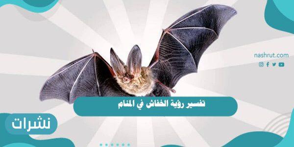تفسير رؤية الخفاش في المنامللعزباء والمطلقة والمتزوجة والرجل
