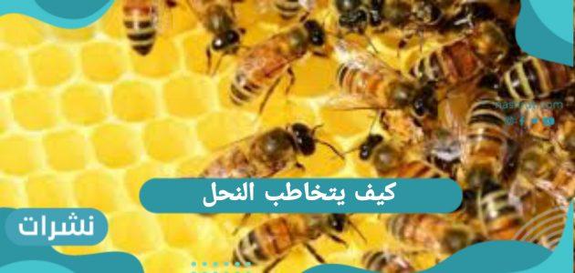 كيف يتخاطب النحل