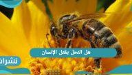 هل النحل يقتل الإنسان