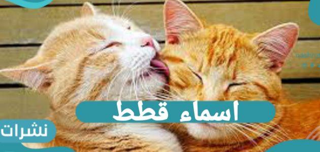 أسماء قطط 2021