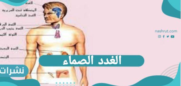 ما هي الغدد الصماء | الفرق بين الغدد الصماء والغير صماء