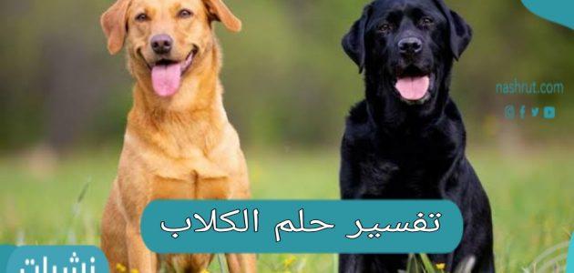 تفسير حلم الكلاب في المنام بحسب حالة الرائي