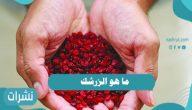 ما هو الزرشك وأهم الفوائد الصحية لعشبة الزرشك