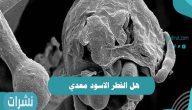 هل الفطر الاسود معدي؟ وكيف تنتقل العدوى