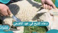 دعاء الذبح في عيد الأضحى مع أهم قواعد وآداب ذبح الأضحية