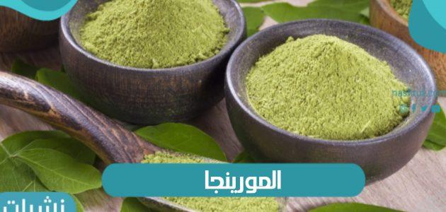 ما هي فوائد نبات المورينجا وكيفية إستخدامه