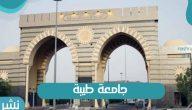 جامعة طيبة آخر موعد لسداد المصروفات