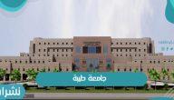 تحويل جامعة طيبة إلى جامعة تطبيقية